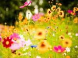 Söyle Sen Hangi Çiçektin?